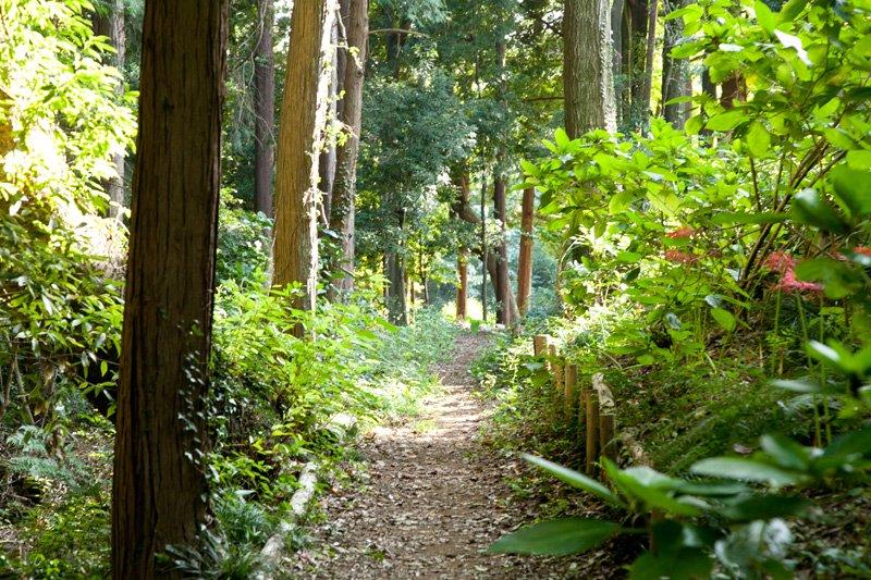 かしの木山自然公園