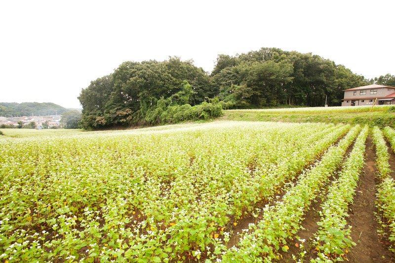 町田市 田園風景
