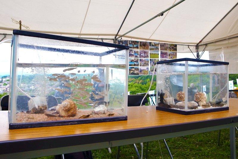鶴見川の生物が観察できる水槽