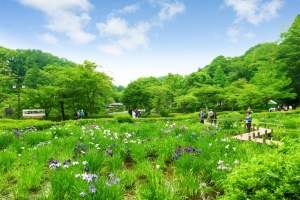 「町田薬師池公園四季彩の杜 しょうぶ・あじさいまつり」に行ってきました!