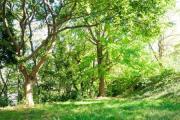 原町田市民の森