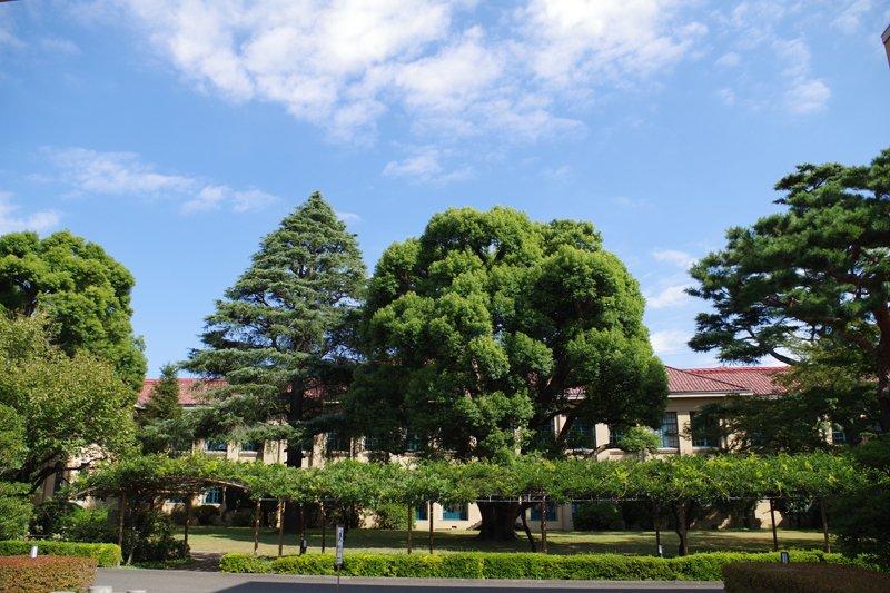 高等学校校舎と中庭の樹々
