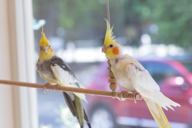 全部で20羽ほどいる小鳥の鳴き声が店内に心地よく響きます。ガラス越しに見る鳥たちは元気一杯!可愛らしい姿で楽しませてくれます。