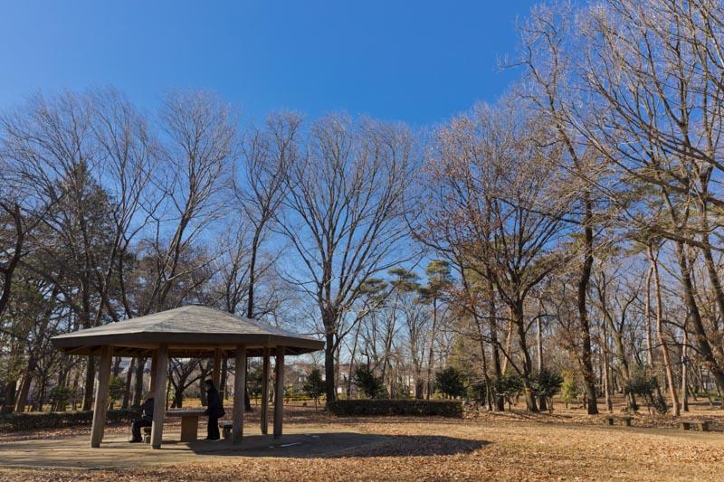 自然いっぱいの「村山中央公園」