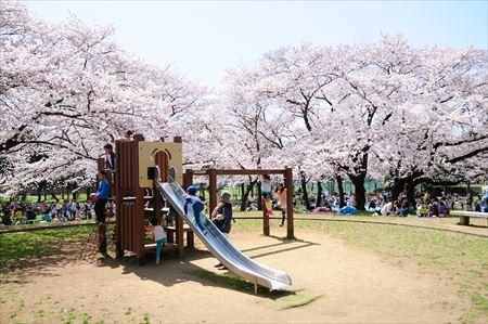 篠崎公園(約3,200m)