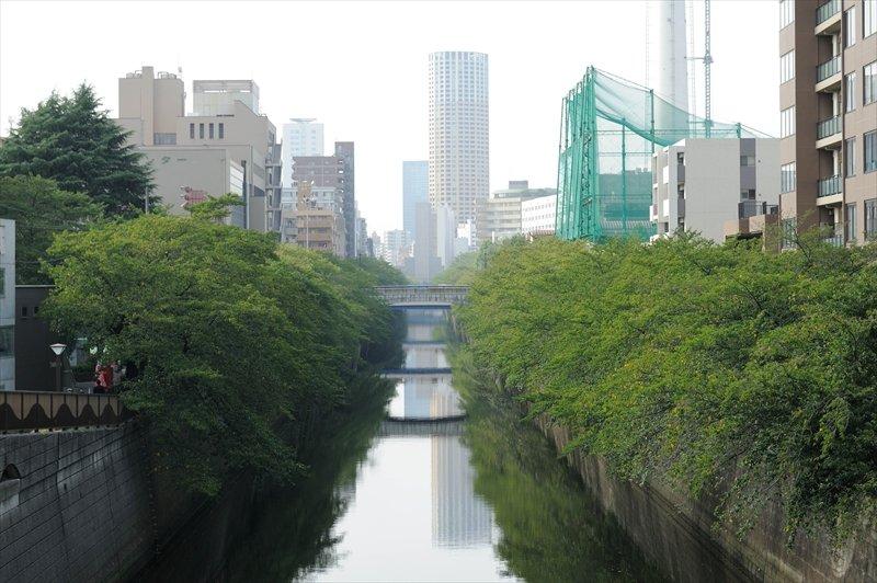 目黒川沿いは緑が多く散歩やランニングコース最適