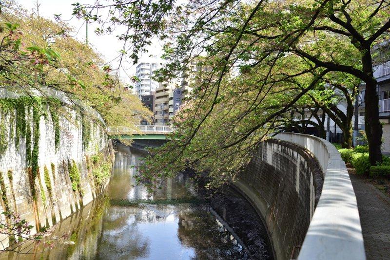 神田川(西早稲田付近)